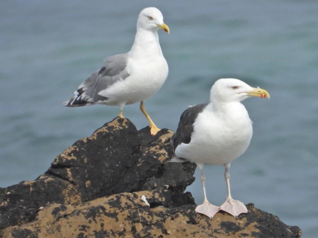 Fórum Aves - Birdwatching em Portugal - Portal Dscn1712