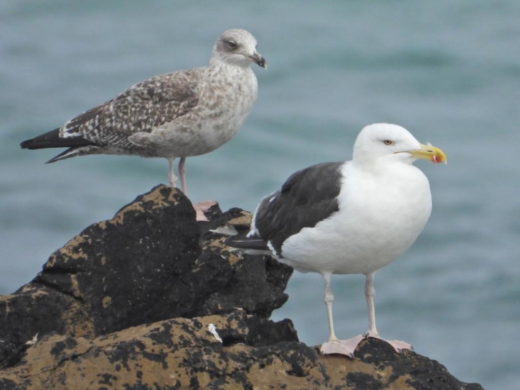 Fórum Aves - Birdwatching em Portugal - Portal Dscn1713