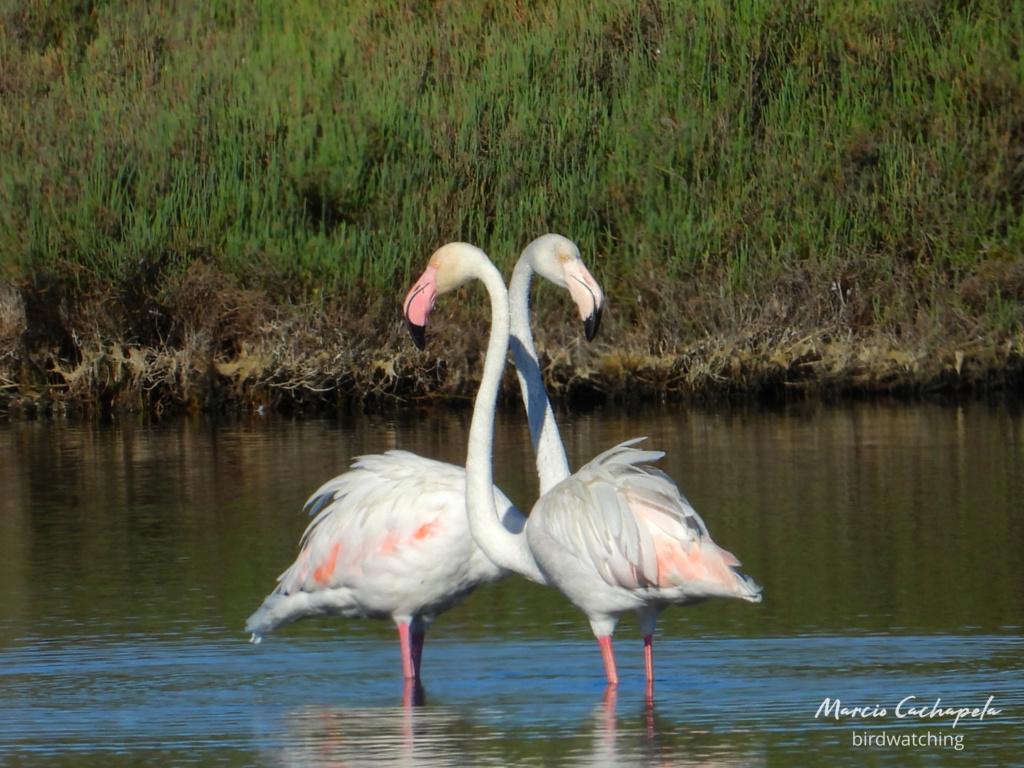 Fórum Aves - Birdwatching em Portugal - Portal Dscn3918