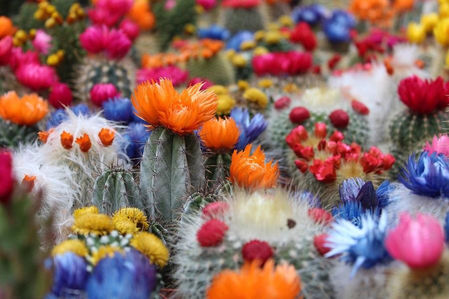 Kaktusi - Page 36 Dma-fl10