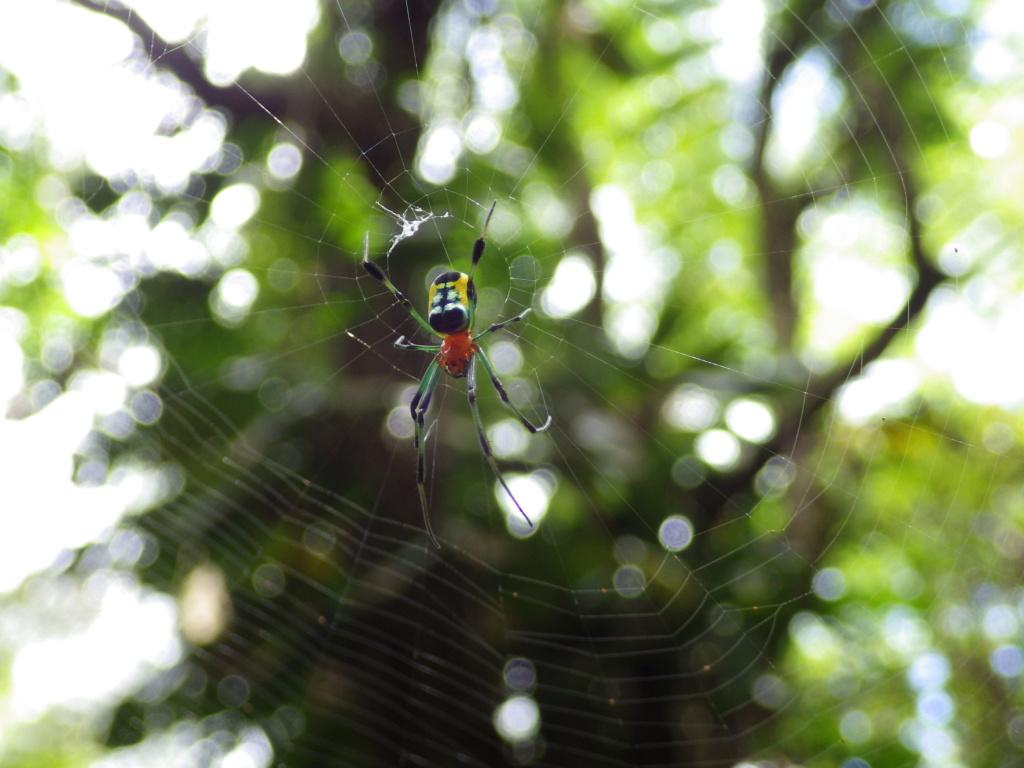 les 8 pattes - araignées et compagnie - Page 23 Imgp4610