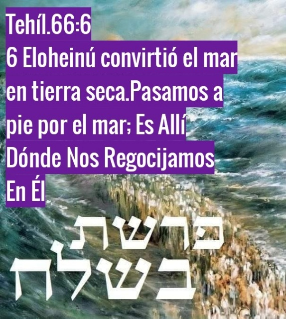 Shalom, yom tov - Página 35 Photo131