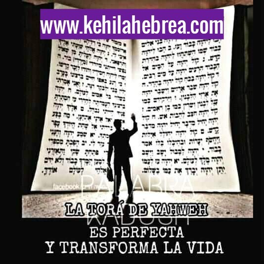 Shalom, yom tov - Página 37 Photo146
