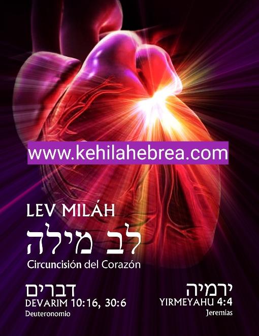 Shalom, yom tov - Página 41 Photo177
