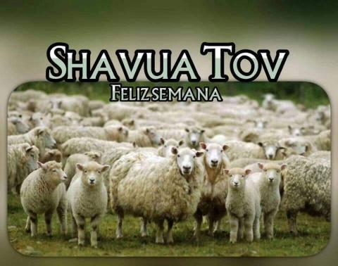 shavua tov ahim y ahoiot - Página 8 Photo181