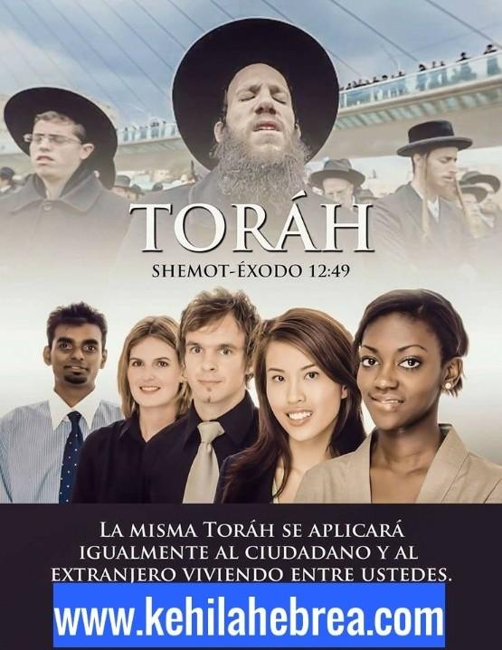Shalom, yom tov - Página 13 Photo259