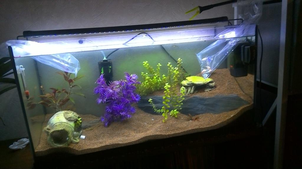 nouveaux poissons dans mon 100L Win_2012