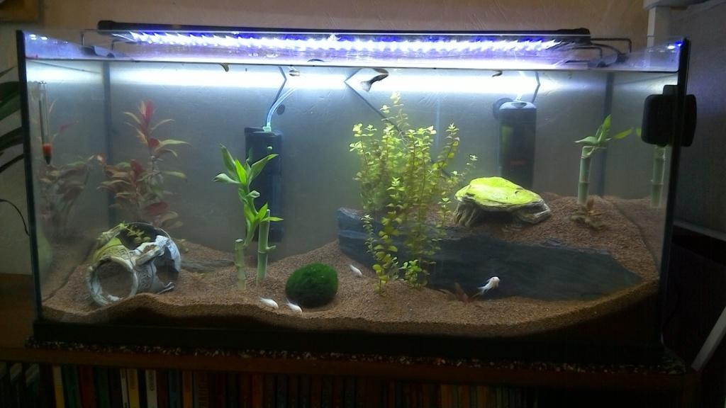 nouveaux poissons dans mon 100L Win_2015