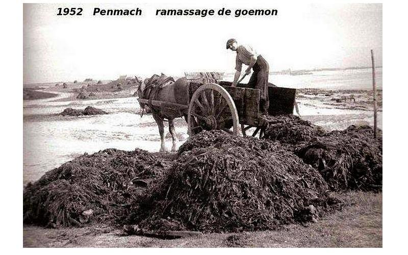 RECOLTE DE GOEMON  Sans2208