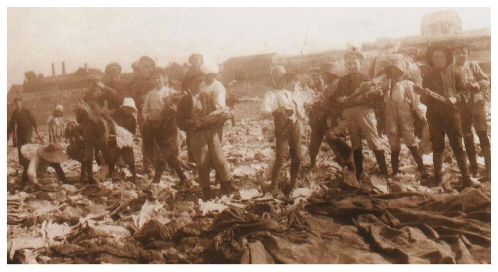"""Les """"graviers"""" Basques et Bretons à Saint-Pierre et Miquelon en 1898. Sans_213"""