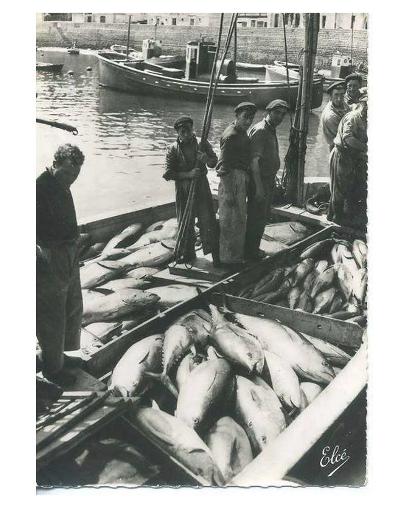 Arrivage du thon à St Jean de Luz Sans_396