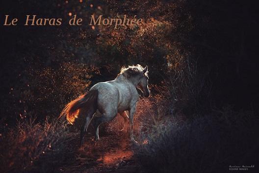Le Haras de Morphée