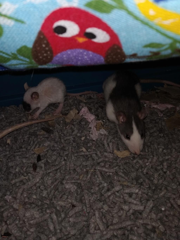Petit rat ? Img_2098
