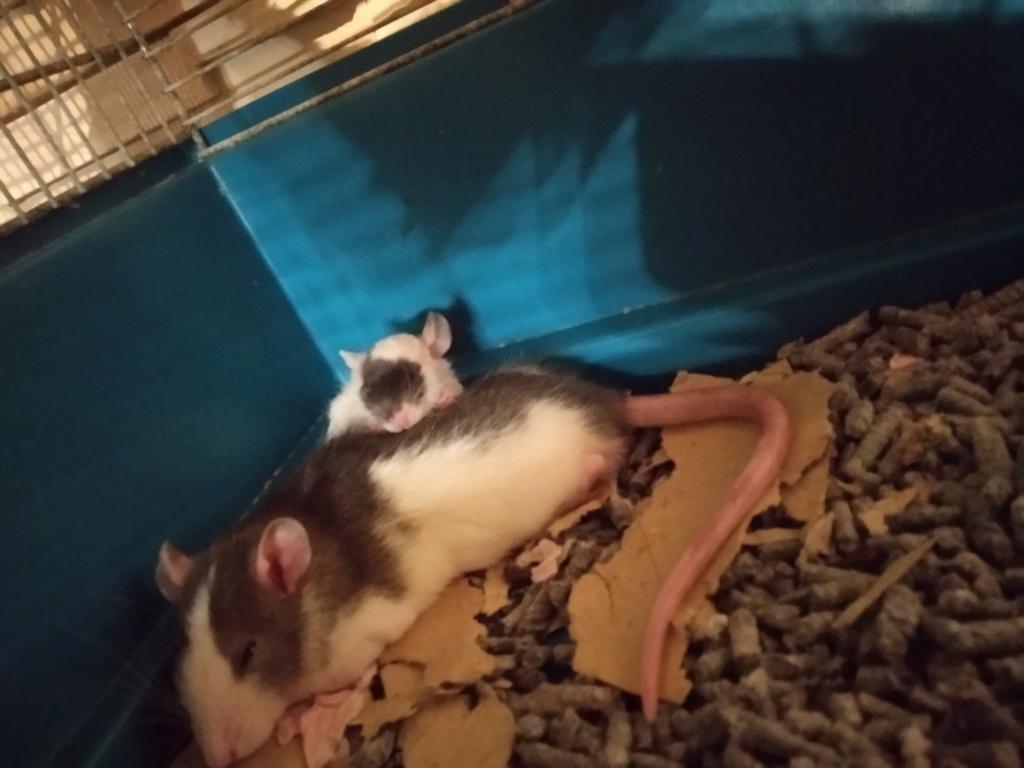 Petit rat ? Img_2100