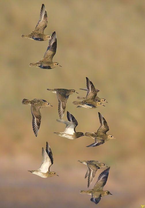 Bird photos. - Page 6 11128