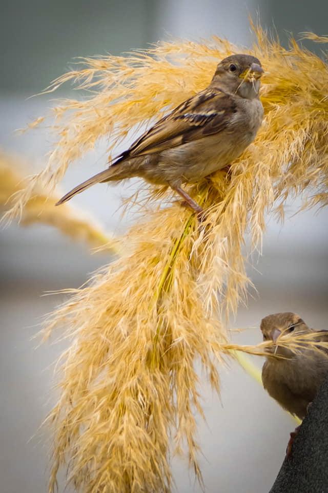 Bird photos. - Page 6 11790710