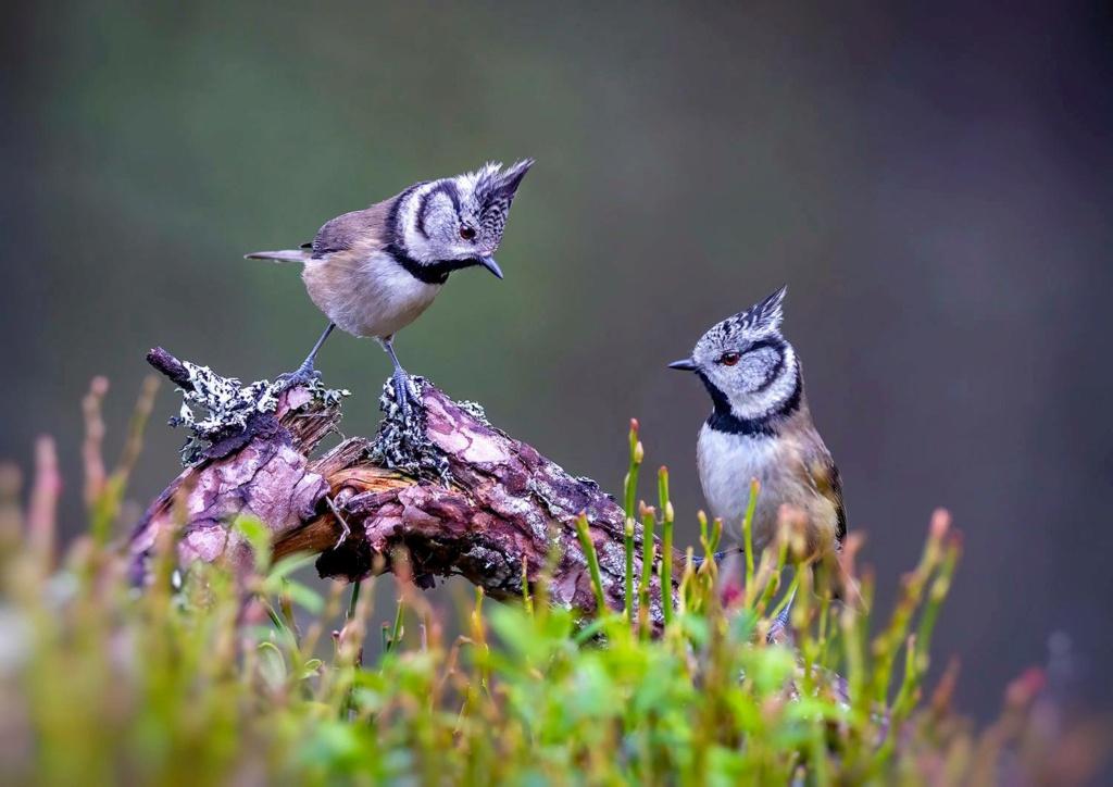 Bird photos. - Page 7 12898210