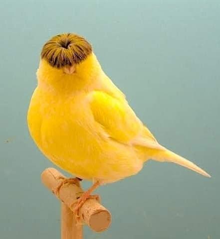 Bird photos. - Page 6 334