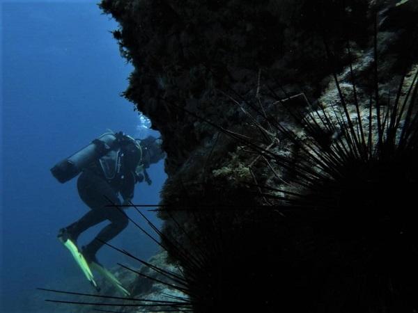 Innoceana on underwater tour 51774-11