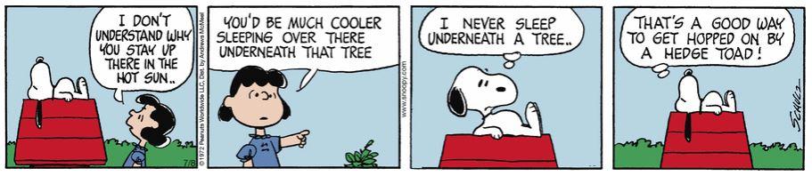 Peanuts. - Page 3 Captu363