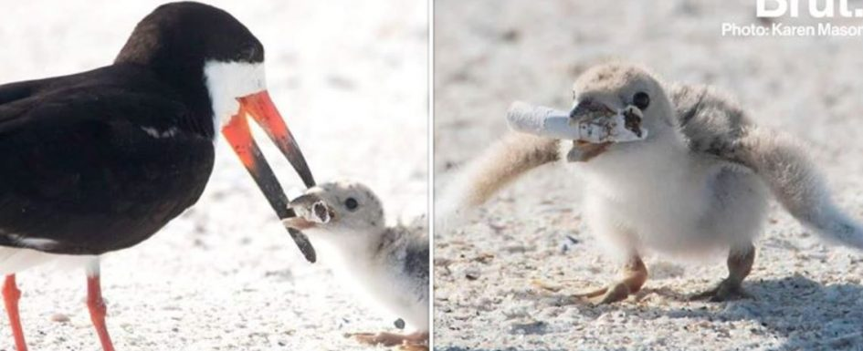 Viral photo shows danger of discarding cigarette butts on beaches and coastlines Karenm10