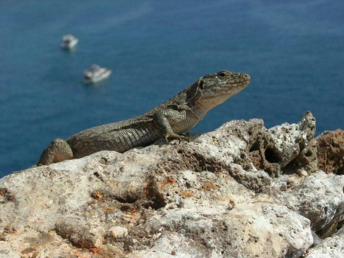 Today 14 August is World Lizard Day Lagart11