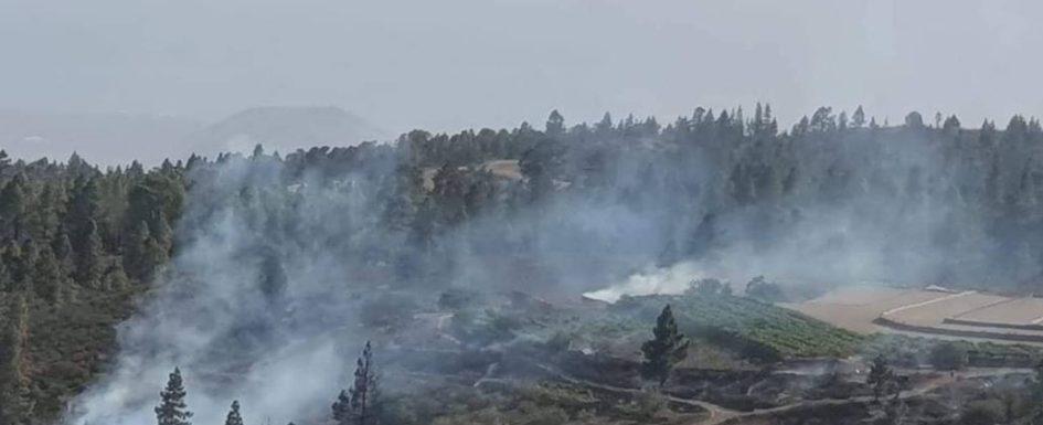 Fire in Vilaflor barranco under control Vilafl10