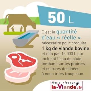 La consommation massive de viande et ses répercutions sur notre environnement 50_lit12
