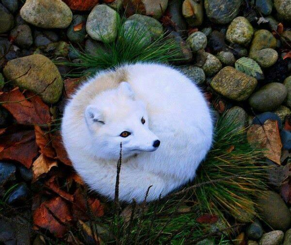 Fotos de animales de todo tipo incluyendo mascotas que más te gustan - Página 24 7e7b3e10