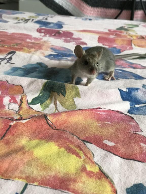 Rat sauvage  70bacd10