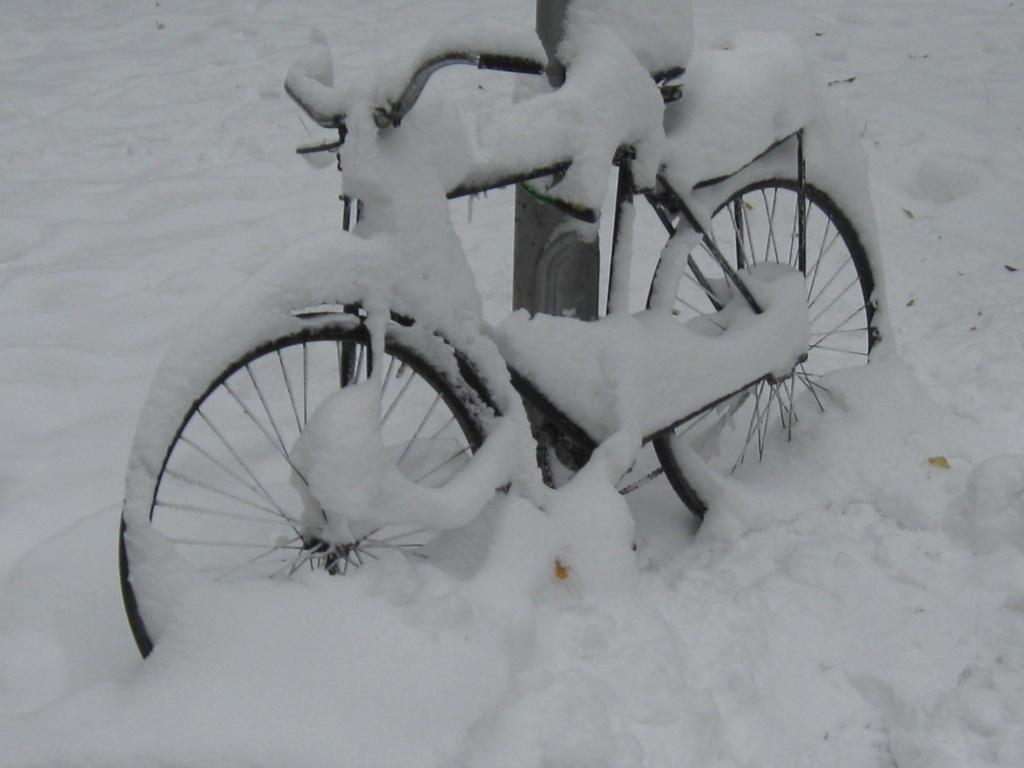 Čistokrvni mešanac Sneg_011