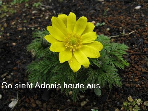 Adonis (Mythologie): Gott / Sinnbild der Schönheit 800px-10