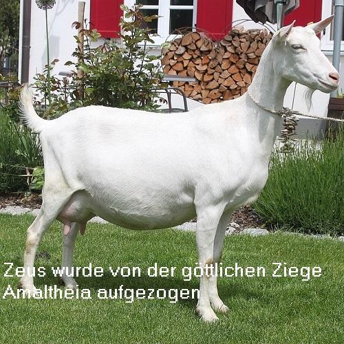 Amaltheia (Mythologie): Göttliche Ziege, die Zeus mit Milch aufzog Amalth10
