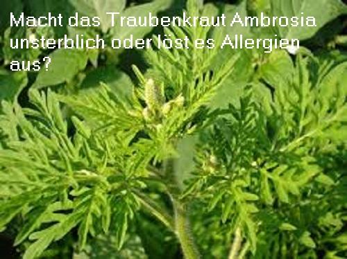 Ambrosia und die unsterblichen Götter Ambros10
