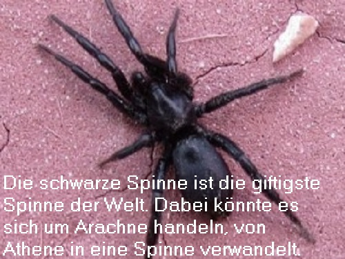 Arachne (Mythologie): Spinnerei Meisterin, schließlich von Athene in eine Spinne verwandelt Arachn10