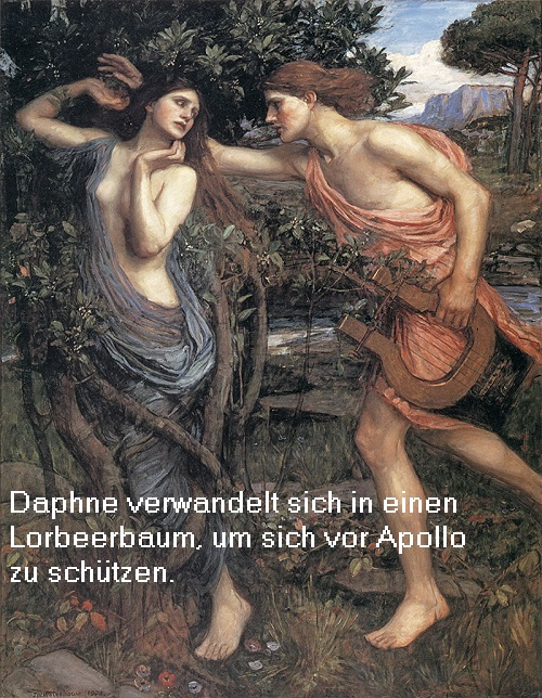 Daphne (Mythologie): Es handelt sich um eine Baumnymphe. Das Wort Daphne wird mit Lorbeer in die deutsche Sprache übersetzt Daphne11