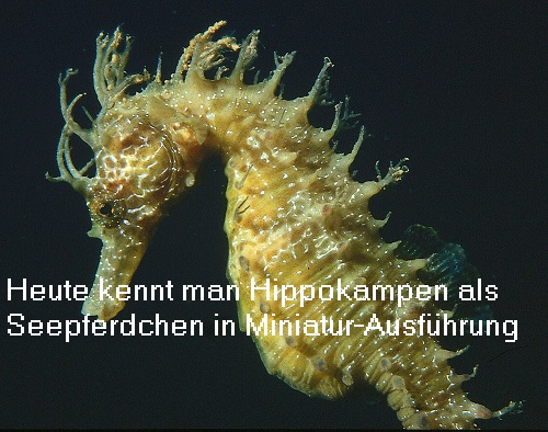 Hippokamp (Mythologie, auch Hippokampos): Mischwesen zwischen Pferd und Fisch Hippok11