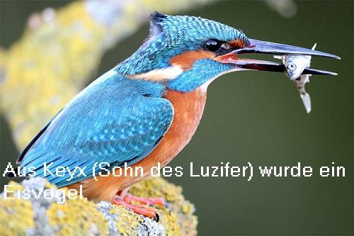 Keyx (Mythologie): Sohn des Lucifer (Luzifer, Morgenstern), wurde zum Eisvogel Keyx10