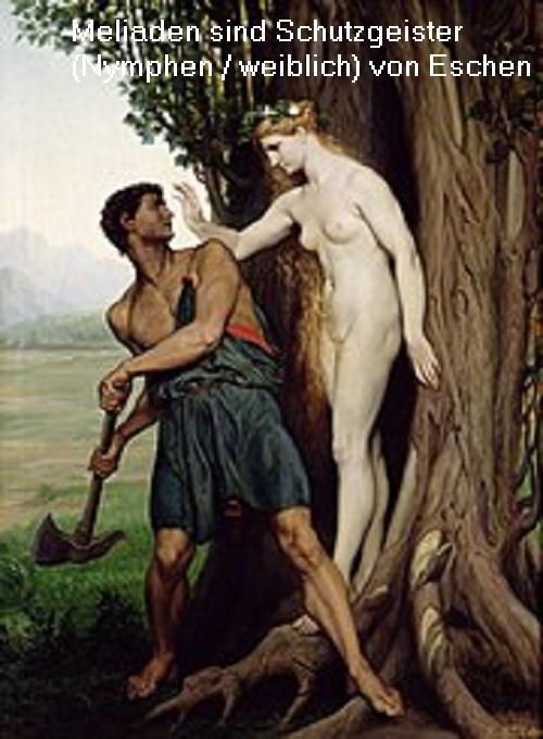 Meliaden (Mythologie): Eine Meliade ist eine Nymphe, die in einer Esche lebt und diese beschützt  Meliad10