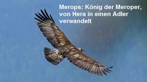 Merops (Mythologie): König der Meroper auf Kos, von Hera in einen Adler verwandelt Merops10