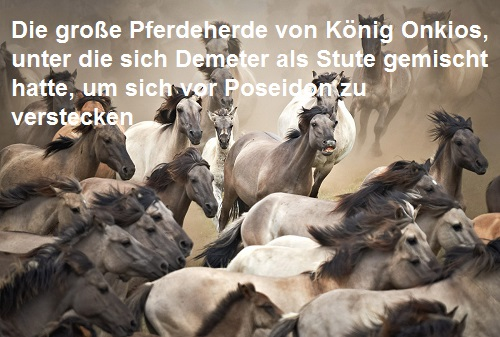 Onkios (Mythologie): König von Onkeion, Besitzer einer großen Pferdeherde Onkios10