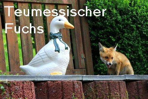 Teumessischer Fuchs: Riesiges Menschenfresser Ungeheuer Teumes10