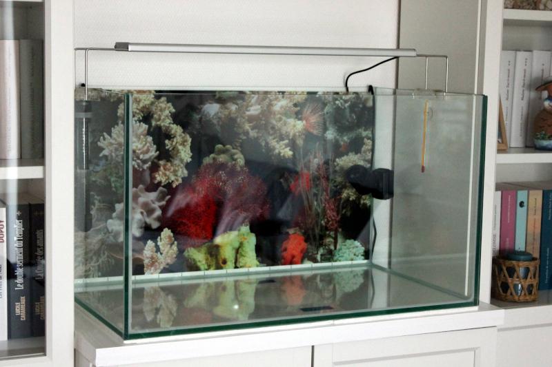Mon petit récif Cuve0011