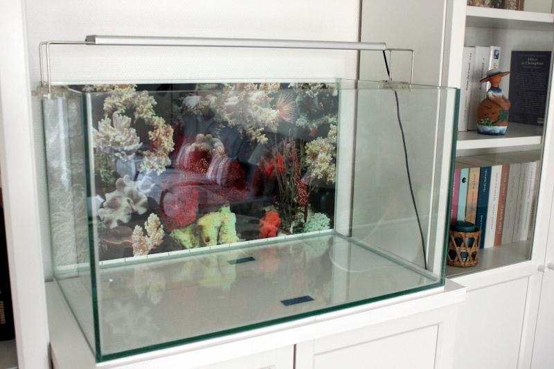 Mon petit récif Cuve0012