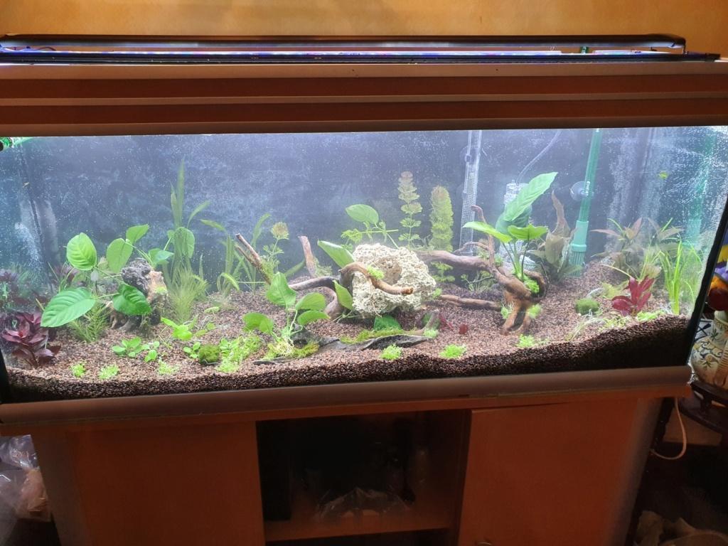 mon aquarium 20210110