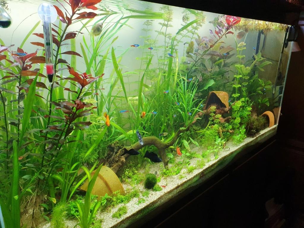 mon aquarium Aqua12