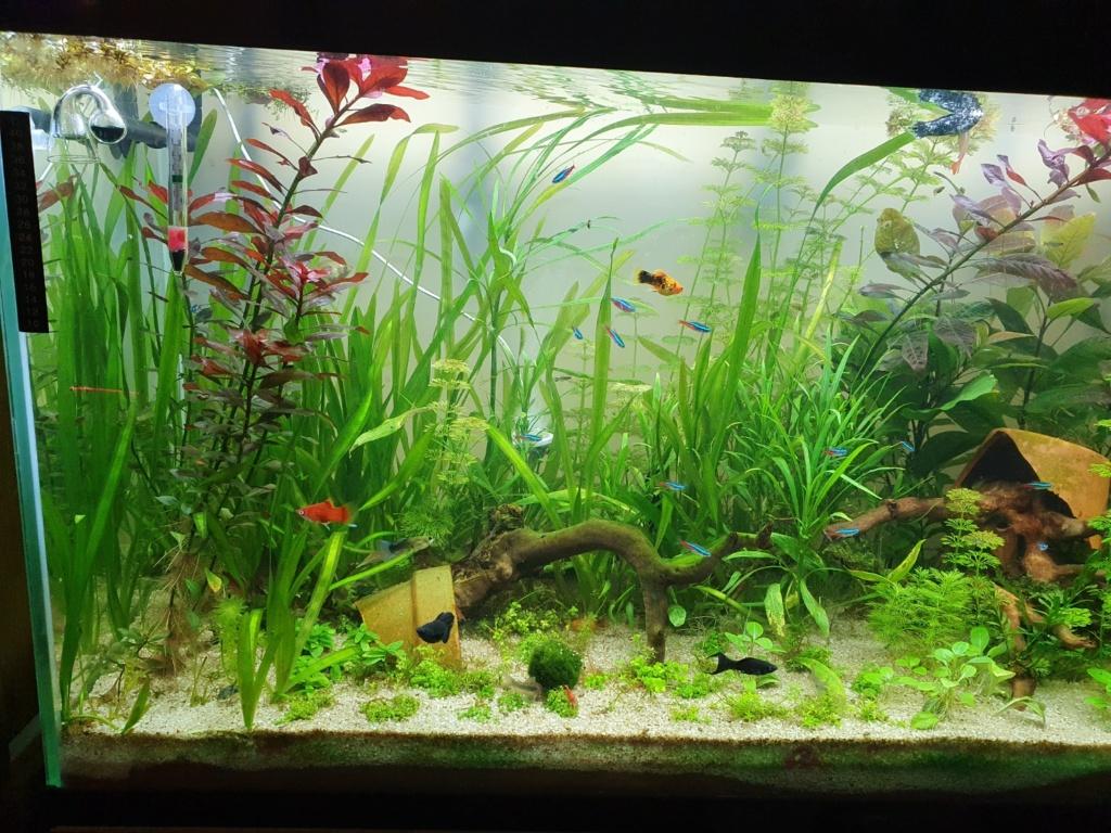 mon aquarium Aqua212