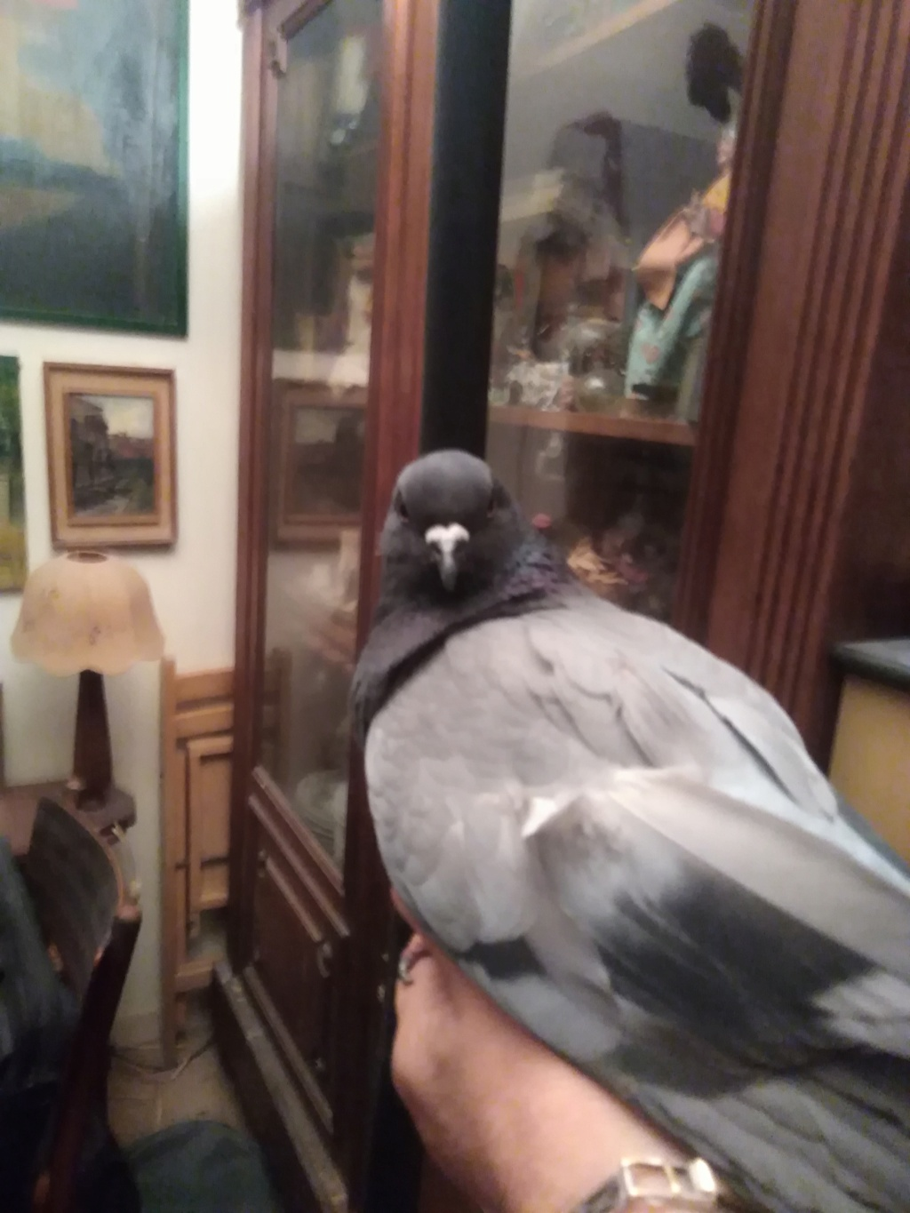 Pigeon apathique Img_2014