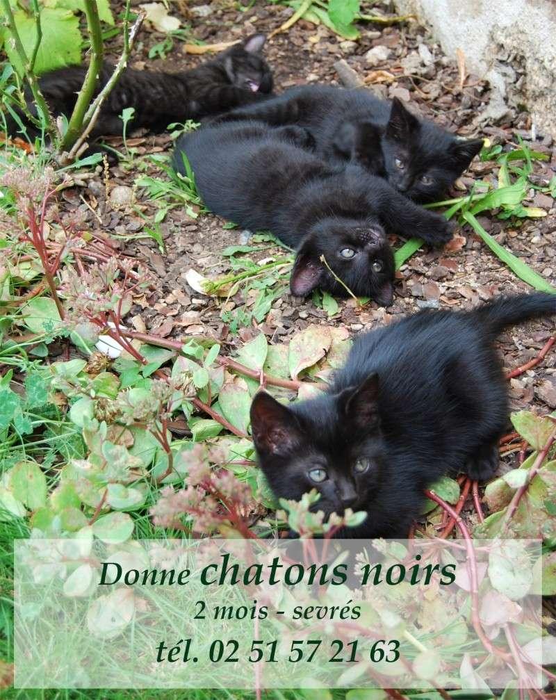 donne chatons Donnec10
