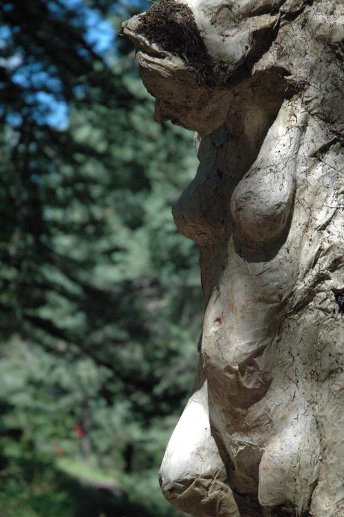 la clef des arts, biennale de sculpture. Gaia10